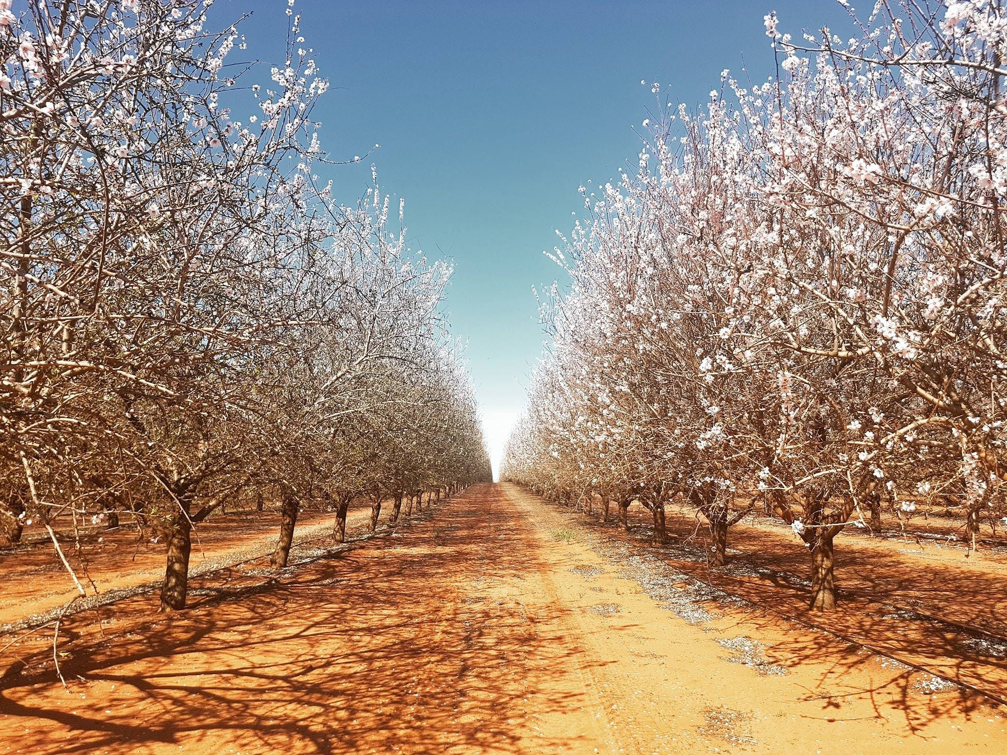 Mallee Almond Blossom Festival - Restaurant Find