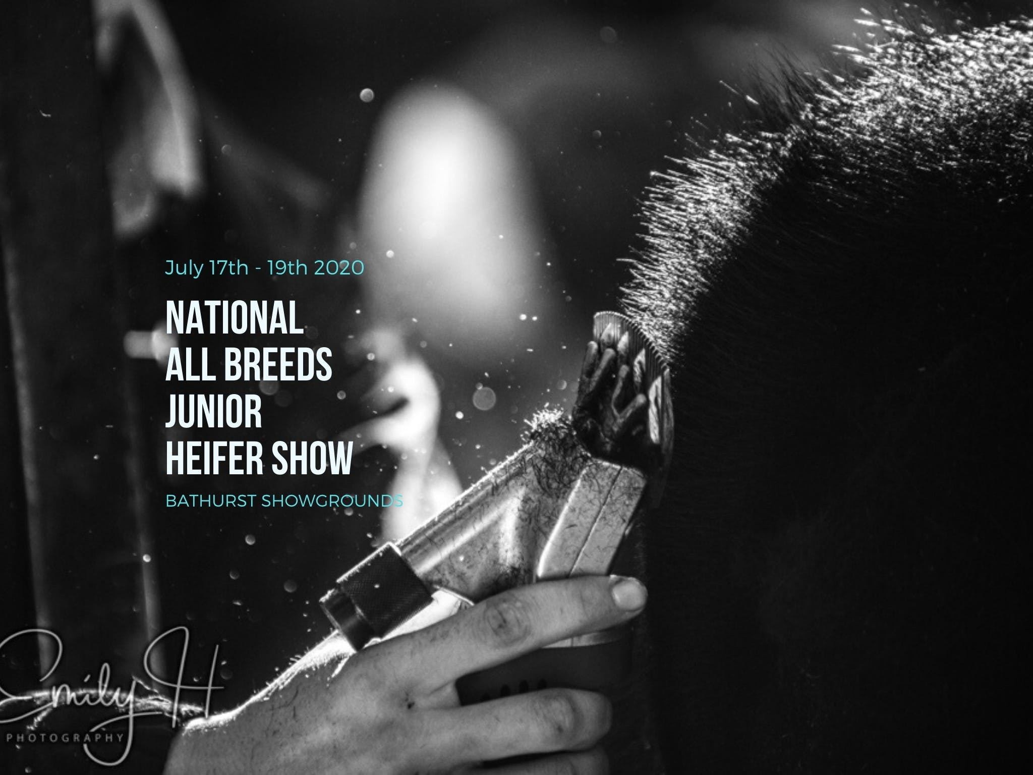National All Breeds Junior Heifer Show - Restaurant Find