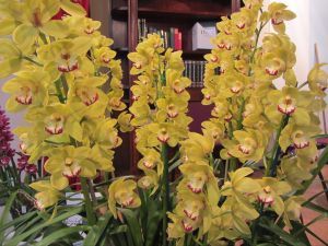 Sapphire Coast Orchid Club Winter Orchid Show - Restaurant Find