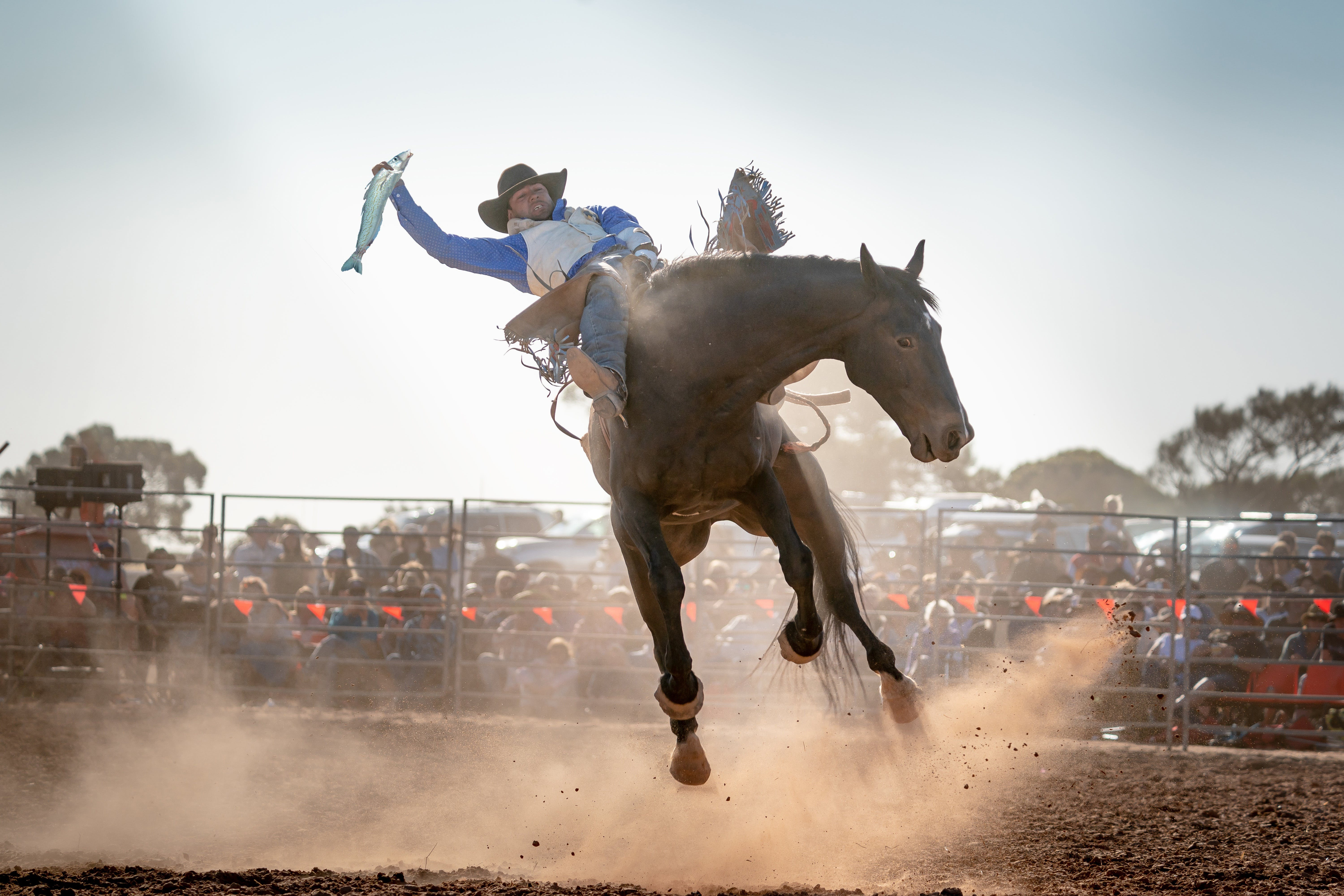 Rodeo by the Sea - Streaky Bay - Restaurant Find